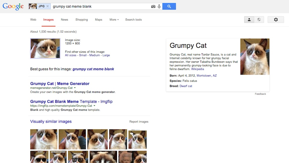 "A page of Google Image Search results, with an image of the ""grumpy cat"" Internet meme as the search query and a number of ""grumpy cat"" websites and images listed as the results."
