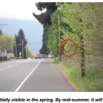 Shows a traffic warning sign partially hidden by green vegetation